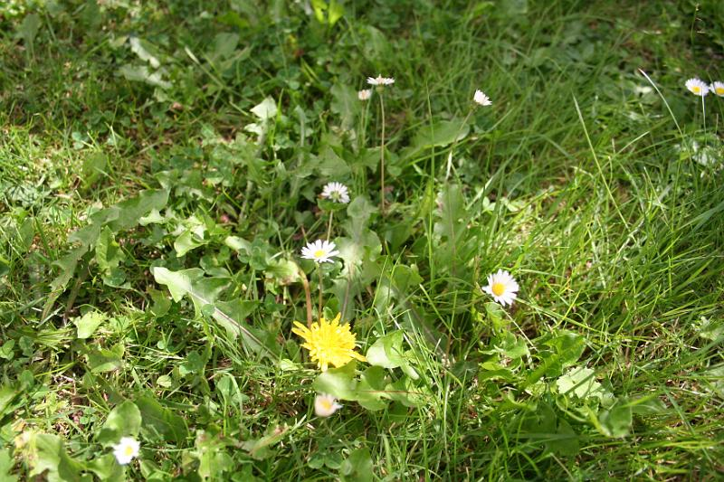 A weed is undesirable because it disrupts the aesthetic appearance of a lawn.