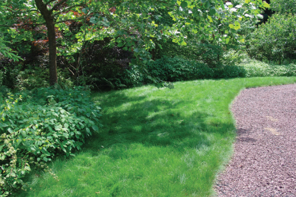 Less commonly used, low fescues (a type of fine-leaf fescue) can make an attractive lawn that is mowed less frequently.
