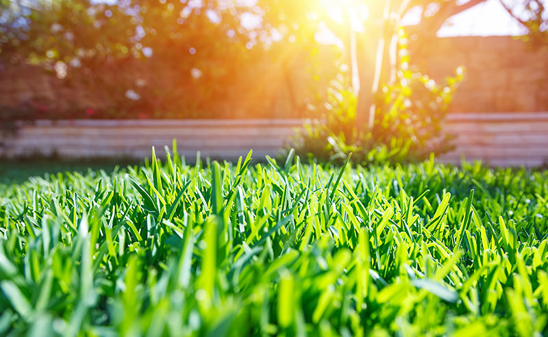 What is a Livable Lawn?
