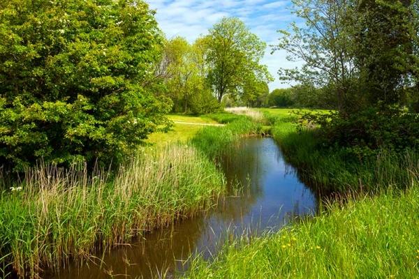 Leave a no-mow buffer zone alongside waterways.